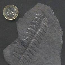 Coleccionismo de fósiles: Z-945- FOSIL HOJA DE HELECHO. Lote 27437276