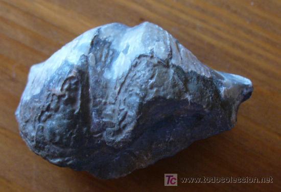 FOSIL DE SPIRIFER (Coleccionismo - Fósiles)