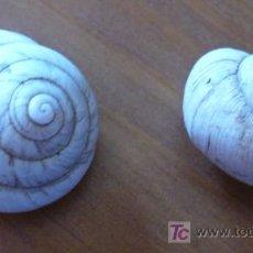 Coleccionismo de fósiles: FOSIL-HELIX. Lote 27265351