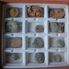 Coleccionismo de fósiles: COLECCIÓN DE 12 FÓSILES. FÓSIL. Lote 21381535