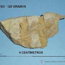 Coleccionismo de fósiles: FÓSIL A CLASIFICAR. LONGITUD MAYOR 9 CM. PESO 125 GRAMOS. Lote 22089529