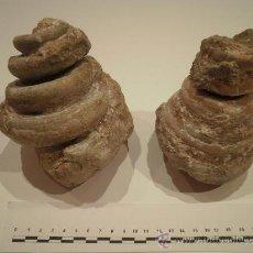 Coleccionismo de fósiles: LOTE DE DOS GASTERÓPODOS FÓSILES DEL EOCENO. GÉNERO CERITHIUM.. Lote 29604666