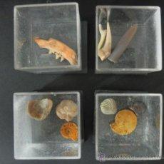 Coleccionismo de fósiles: LOTE DE 9 FOSILES. Lote 30985635