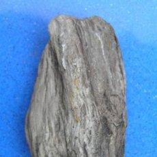Coleccionismo de fósiles: MADERA FÓSIL.. Lote 34721817