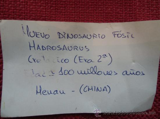 Coleccionismo de fósiles: HUEVO DE DINAUSORIO - Foto 5 - 35259074