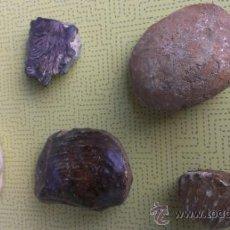 Coleccionismo de fósiles: BONITA COLECCION DE FOSILES MARINOS.. Lote 38656751