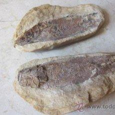Coleccionismo de fósiles: PEZ FOSIL EN ROCA. Lote 38881287