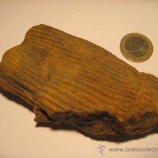 Coleccionismo de fósiles: Z-924- FOSIL DE CALAMITES. Lote 39024907
