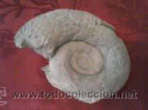 EXTRAORDINARIO FOSIL DE AMMONITES LITOCERAS (Coleccionismo - Fósiles)