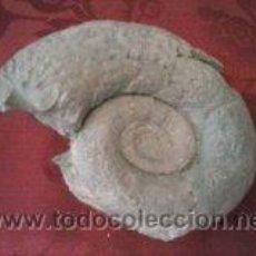Coleccionismo de fósiles: EXTRAORDINARIO FOSIL DE AMMONITES LITOCERAS. Lote 41738840