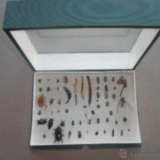 Coleccionismo de fósiles: COLECCION DE COLEOCTEROS ESCARABAJOS CIEMPIES. Lote 44456551