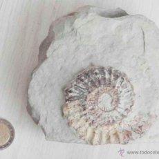 Coleccionismo de fósiles: FÓSIL DE AMMONITES.. Lote 47806368