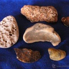 Coleccionismo de fósiles: FOSILES MARINOS / IBIZA. Lote 48873962