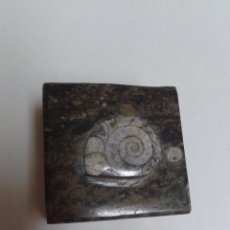 Coleccionismo de fósiles: PRECIOSA CAJITA/ JOYERO HECHO CON UNA PIEZA FOSIL. Lote 49515595