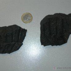 Coleccionismo de fósiles: LOTE HELECHO FÓSIL. POLYMORPHOPTERIS. CARBONÍFERO. Lote 49898165
