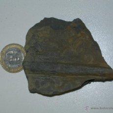 Coleccionismo de fósiles: HELECHO FÓSIL. ¿CALAMITES?. CARBONÍFERO. Lote 49965462