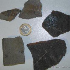 Coleccionismo de fósiles: HELECHO FÓSIL. SPHENOPYLLUM, POLYMORPHOPTERIS, ANNULARIA Y NEUROPTERIS. CARBONÍFERO . Lote 49965961