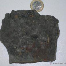 Coleccionismo de fósiles: HELECHO FÓSIL. SIGILLARIA DESCORTEZADA. CARBONÍFERO. Lote 49966116