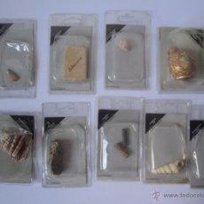 Coleccionismo de fósiles: 9 FÓSILES Y MINERALES DE COLECCIÓN EDICIONES DEL PRADO. FÓSIL. LOTE 2. . . Lote 51175991