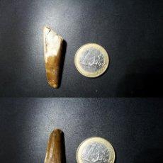 Coleccionismo de fósiles: DIENTE DE ESPINOSAURIO FOSÍL. Lote 62986870