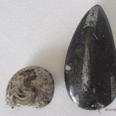 Coleccionismo de fósiles: FOSIL - AMONITES Y ORTHOCERAS. Lote 53909544