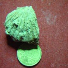 Coleccionismo de fósiles: FÓSILES CONCHAS. Lote 54066635