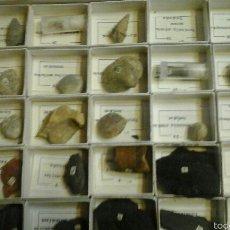 Coleccionismo de fósiles: CAJA FÓSILES. Lote 54595012