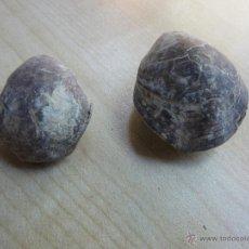 Coleccionismo de fósiles: 2 CONCHAS FÓSILES MARINAS. Lote 55009942