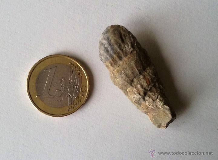 Coleccionismo de fósiles: FÓSIL MARINO. HUESCA. - Foto 3 - 55083257