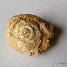 Coleccionismo de fósiles: FÓSIL MARINO. HUESCA.. Lote 55083410