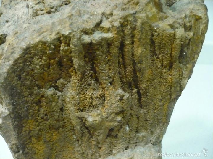 Coleccionismo de fósiles: TROZO DE ARBOL FOSILIFICADO 27 CM X 12CM - Foto 4 - 55967787