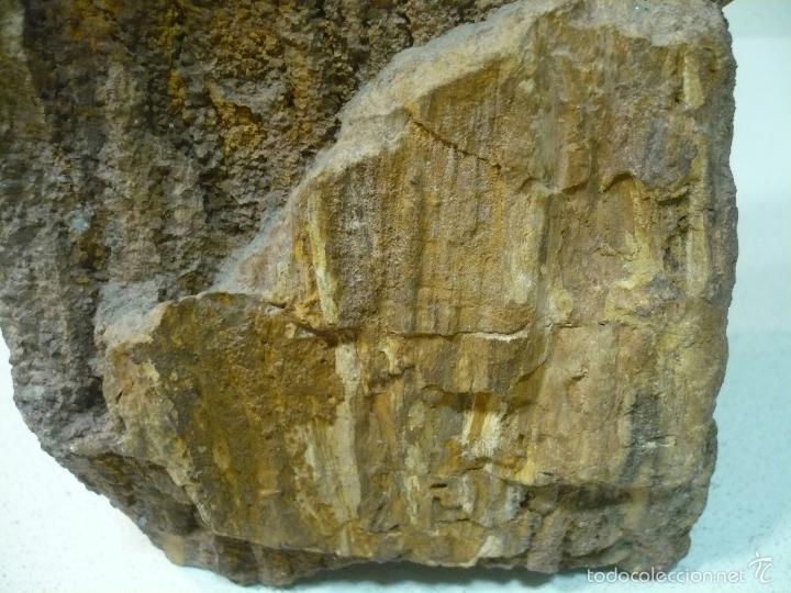 Coleccionismo de fósiles: TROZO DE ARBOL FOSILIFICADO 27 CM X 12CM - Foto 5 - 55967787