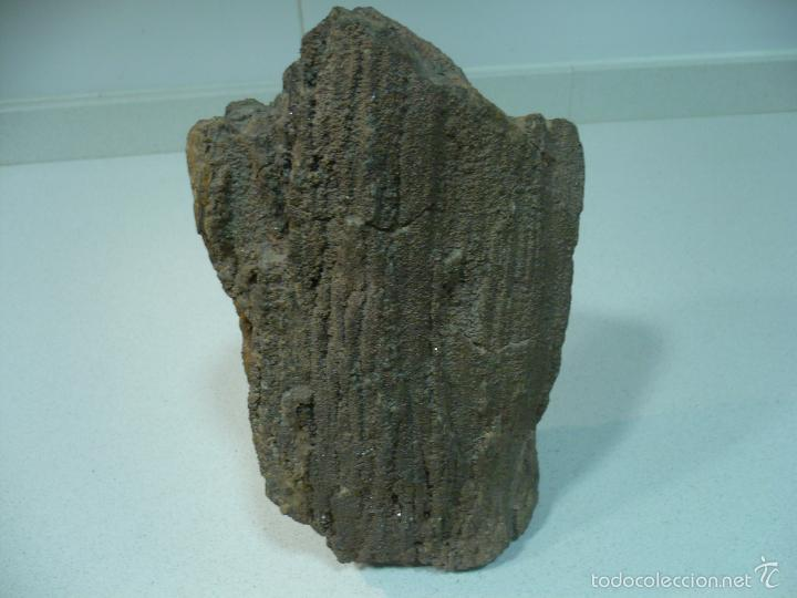 Coleccionismo de fósiles: TROZO DE ARBOL FOSILIFICADO 27 CM X 12CM - Foto 10 - 55967787