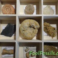 Coleccionismo de fósiles: CAJA FÓSILES. Lote 253073740
