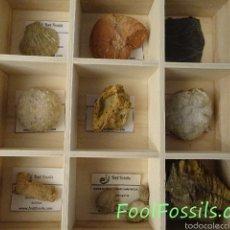 Coleccionismo de fósiles: CAJA FÓSILES. Lote 56611773