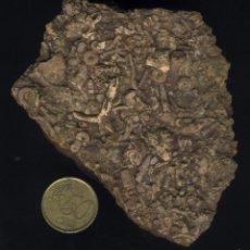 Coleccionismo de fósiles: Z-125- ROCA FOSILIFERA. Lote 56644359