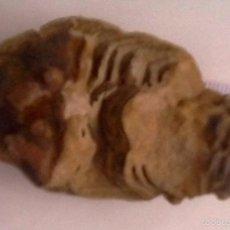Coleccionismo de fósiles: TRILOBITES. ARTRÓPODOS FÓSILES QUE VIVIERON DURANTE EL PALEOZOICO, DEL CÁMBRICO AL PÉRMICO.. Lote 56990221