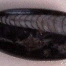 Coleccionismo de fósiles: ORTHOCERAS. FOSIL DE CEFALÓPODO DE CONCHA QUE VIVIÓ DESDE EL ORDOVÍCICO HASTA EL TRIÁSICO.. Lote 56990364