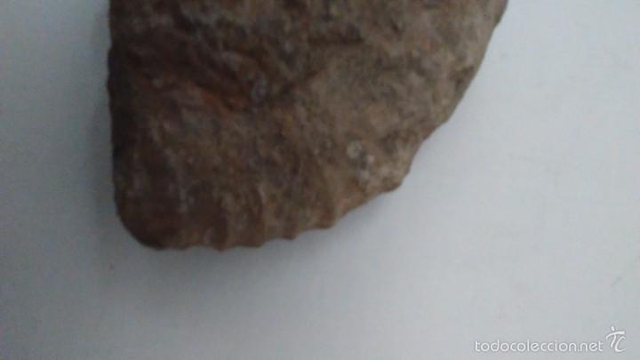 Coleccionismo de fósiles: Fósil Trilobites - Foto 3 - 61064219