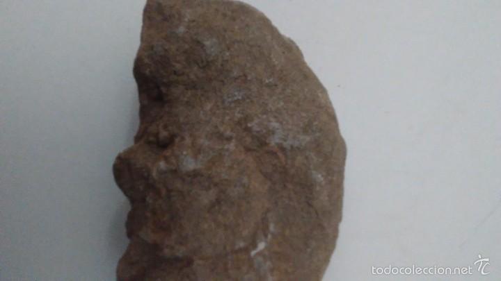 Coleccionismo de fósiles: Fósil Trilobites - Foto 5 - 61064219