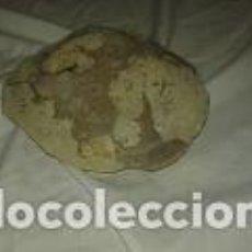 Coleccionismo de fósiles: FOSIL CONCHA. Lote 68997877