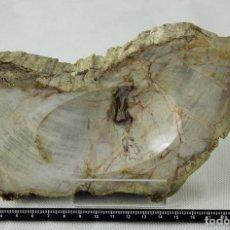 Coleccionismo de fósiles: XILÓPALO, MADERA FÓSIL (TRIÁSICO ARGENTINO). 200-250 MILLONES DE AÑOS. SECCIÓN TRANSVERSAL DE UN TRO. Lote 69814826