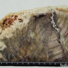 Coleccionismo de fósiles: XILÓPALO, MADERA FÓSIL (TRIÁSICO). 200 MILLONES DE AÑOS. BLOQUE DE 2700 GRAMOS, 160 X 110 X 80 MM. Lote 69904621