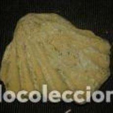 Coleccionismo de fósiles: FOSIL DE 7X7. 5 CM. Lote 70192153