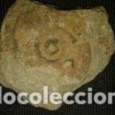 Coleccionismo de fósiles: FOSIL DE 6X5X1 CM. Lote 70195205