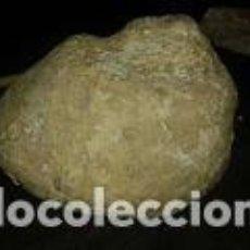 Coleccionismo de fósiles: FOSIL CARACOLA 12X10X6 CM. Lote 70225373