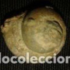 Coleccionismo de fósiles: FOSIL CARACOLA 3X3X2CM. Lote 70351833