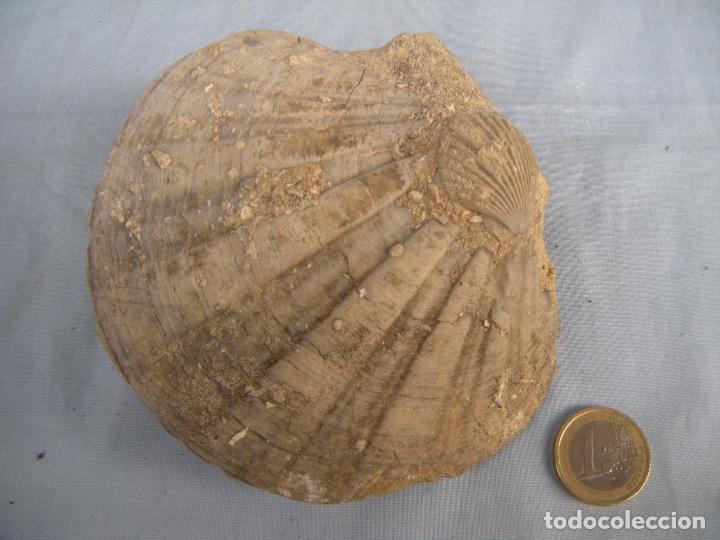Coleccionismo de fósiles: FÓSIL - Foto 4 - 77375713