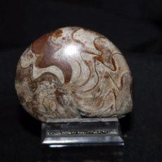 Coleccionismo de fósiles: FOSIL - GONIATITES (PULIDO) DEVÓNICO, MARRUECOS 6,3 CM. ? - FÓSILES. Lote 82341240