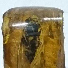 Coleccionismo de fósiles: AMBAR MUY ANTIGUO CON UNA CICADA DENTRO FOSILIZADA, 218 GRAMOS DE PESO. Lote 86281876